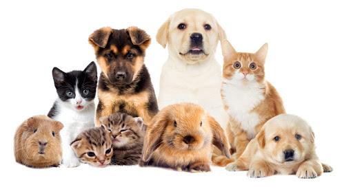 ubezpieczenie zwierząt domowych